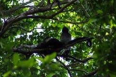 Eine wilde Familie von den Affen, die nah zusammen auf einem Baum im Dschungel an einem Sommertag sitzen Lizenzfreies Stockfoto