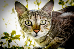 Eine wilde Katze lizenzfreies stockbild
