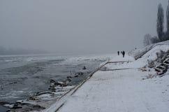 Eine Wildente auf einem Eis durch das offene Wasser des Flusses in der Winterzeit lizenzfreies stockbild