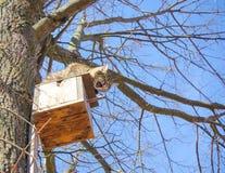 eine Wildkatze kletterte das Vogelhaus, um starli zu fangen Stockfotos