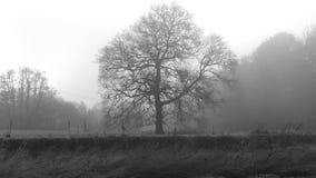 Eine Winterszene in England mit den Bäumen eingehüllt in Nebel Lizenzfreie Stockfotografie