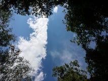Eine Wolke durch den Waldhimmel Stockfotografie