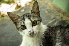 Eine wundernde Katze schaut zur Kamera Stockbilder