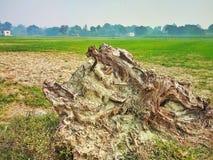 Eine Wurzel eines cutted Baums und des Ackerlandes lizenzfreies stockfoto