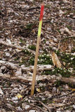 Eine Zecke im Wald Lizenzfreie Stockfotos