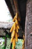 Eine Zeichenkette von Mais Lizenzfreies Stockbild