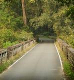 Eine Zementstraße, die durch einen Wald überschreitet lizenzfreie stockbilder