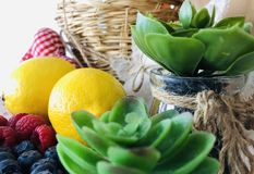 Eine Zusammensetzung des Kaktus, der Zitronen, der Himbeeren und der Blaubeeren stockbild