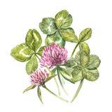 Eine Zusammensetzung von roten Blumen des Klees und von Blättern - ein quatrefoil und ein Shamrock Botanische Illustrationen des  Lizenzfreie Stockbilder
