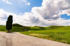 Eine Zypresse in einer Landschaftsstraße in Toskana Stockfoto