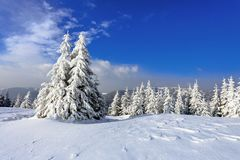 An einem eisigen schönen Tag unter Hochgebirge und Spitzen sind die magischen Bäume, die mit weißem flaumigem Schnee bedeckt werd lizenzfreie stockbilder