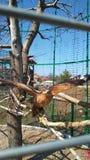 In einem Käfig auf einer Niederlassung eines Adlers Lizenzfreie Stockfotos