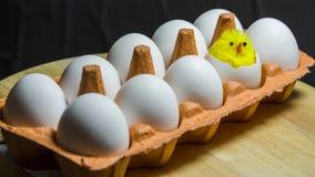 In einem Karton sind zehn Eier Ein kleines Küken ausgebrütet von einem Ei Das Konzept ist die Geburt eines neuen Lebens lizenzfreie stockfotos