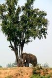 In einem Lager für Elefanten Stockfoto