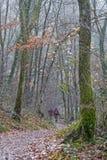 An einem nebeligen Tag im Wald gehen lizenzfreies stockbild