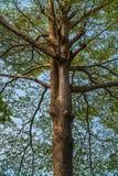 einem schönen Baum oben betrachten Lizenzfreie Stockfotos