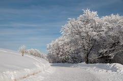 In einem schneebedeckten Wald Lizenzfreies Stockfoto