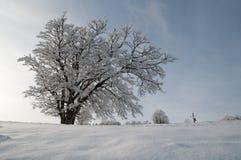 In einem schneebedeckten Wald Stockfotografie