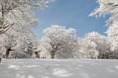 In einem schneebedeckten Wald Stockfoto