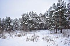 In einem schneebedeckten Wald waren die Ruhe der Schneezahlen so ausdrucksvoll, dass sie sonderbar wird lizenzfreie stockbilder