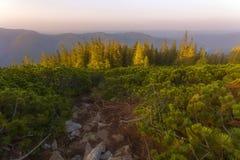 An einem Sommerabend in der Identifikation vom Berg Stockfotos