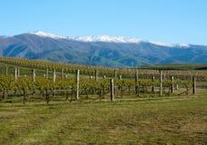 In einem Weinberg, der Berge nahe Clyde und Alexandra in Neuseeland betrachtet lizenzfreie stockfotos