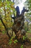 Einen Baum in einer Waldfläche schlagen, die interessant schaut Lizenzfreie Stockfotografie