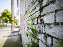 Einen Besuch zum chinesischen allgemeinen Dorf haben stockfotos