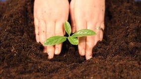 Einen jungen Baumabschluß oben pflanzen stock video footage