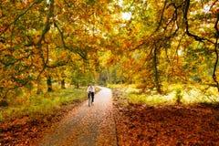 Herbstradfahren Stockfoto