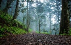 In einen Wald Stockbilder