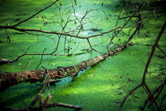 In einer Mitte eines Sumpfes Lizenzfreie Stockfotos