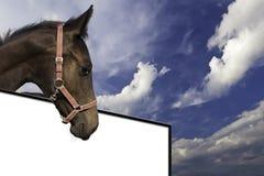 Einer Tafel oberhalb Pferd Стоковые Фото