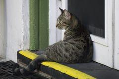 Einer von Nachkommen der sechs Zehenkatzen bei Ernest Hemingway House in Key West, Florida Stockbild