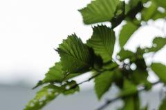 Einfach Grün Stockfoto