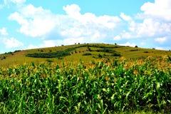 Einfach mit Körnern in der erntenden Zeit Auf einem Hintergrund eines Hügels Lizenzfreies Stockfoto