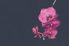 Einfach Orchidee Stockbilder