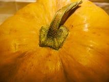 Einfach pumpking stockfotografie