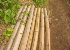 Einfache Bambusbank neben dem Waldweg Lizenzfreies Stockfoto