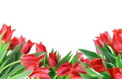 Einfache Collagenpostkarte von den roten Tulpen stockbilder