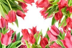 Einfache Collagenpostkarte von den roten Tulpen stockfoto
