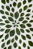 Einfache Grünblätter auf weißem Hintergrund Flache Lage Natur concep Stockfoto