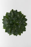 Einfache Grünblätter auf weißem Hintergrund Flache Lage Natur concep Lizenzfreie Stockbilder