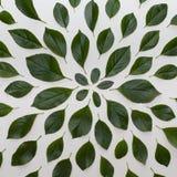 Einfache Grünblätter auf weißem Hintergrund Flache Lage Natur concep Lizenzfreie Stockfotografie