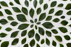 Einfache Grünblätter auf weißem Hintergrund Flache Lage Natur concep Stockfotografie