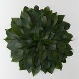 Einfache Grünblätter auf weißem Hintergrund Flache Lage Natur concep Stockbilder