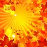 Einfache Herbstschablone auf Strahlnhintergrund-Vektorillustration Lizenzfreies Stockfoto
