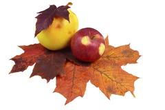 Einfache Herbstzusammensetzung Stockbilder