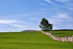 Einfache landwirtschaftliche Szene. stockbild