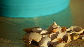 Einfache Muscheln Stockfotos